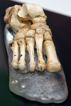 Spain: Half a million years old fossil foot of a Homo heidelbergensis was reconstructed from bones found in the Sima de los Huesos in Atapuerca