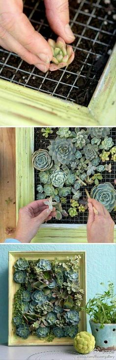 Want to make your interior more beautiful and attractive? Why not try to make a mini garden by planting some indoor plants? Installing an indoor garden in your home is a great way to (Diy Garden Ideas) Succulent Gardening, Cacti And Succulents, Planting Succulents, Container Gardening, Gardening Tips, Planting Flowers, Succulent Landscaping, Landscaping Design, Organic Gardening