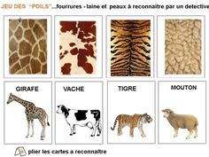 Sciences - peau des animaux animals silly animals animal mashups animal printables majestic animals animals and pets funny hilarious animal Montessori Science, Preschool Science, Zoo Animals, Animals And Pets, Le Zoo, Pet Day, Animal Habitats, Animal Activities, Montessori Materials