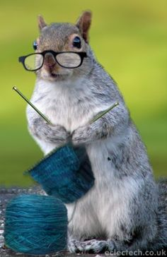 PetsLady's Pick: Funny Knitting Squirrel Of The Day Knitting Quotes, Knitting Humor, Crochet Humor, Knit Crochet, Baby Animals, Funny Animals, Cute Animals, Cute Squirrel, Squirrels