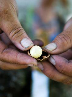 Suvarrow macadamia