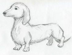 step by step sausage dog