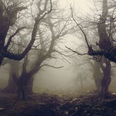 Walnut Forest #trees #forest #walnut #walnuttrees #walnutforest #mist #fog #creepy #spooky #gothic