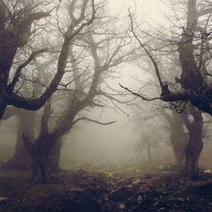 Walnut forest IV by *vbagiatis on deviantART