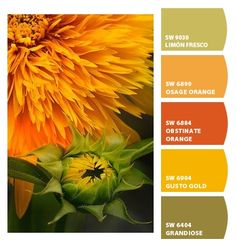 ‿✿⁀ Never seen a sunflower like this ‿✿⁀ ColorSnap by CNH