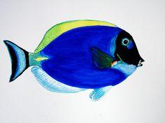 Blue Surgeonfish (Dori) in watercolors.