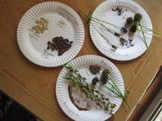 Seed Saving: How to save seeds from your garden vegetables and fruit