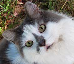 Kitty Portrait by Haley Dawn on 500px