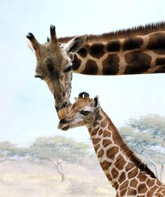 A female giraffe calf born this month at the Wildlife Conservation Society's Bronx Zoo stays close to her mother in New York on March 22.