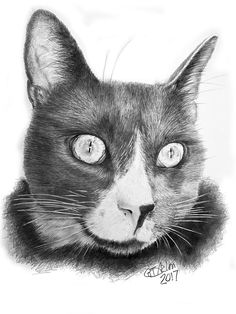 This pencil drawing of a cat is of Onyx a beautiful cat that lives in the States. So yes I do send drawings of cats abroad.