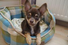 Plastic Laundry Basket, Chihuahua, Decor, Decoration, Chihuahua Dogs, Decorating, Chihuahuas, Deco