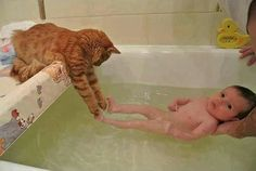 The cat tries to save the baby from the tub