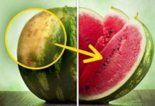 How to pick a perfect watermelon: tips from an experienced farmer - Green Life Nature Fruit Recipes, Healthy Recipes, Recipies, Healthy Life, Healthy Eating, Sweet Watermelon, Picking Watermelon, Green Life, Things To Know