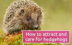 Hedgehogs require an extra helping hand, especially over winter. Follow David's tips on how to care for hedgehogs in the garden
