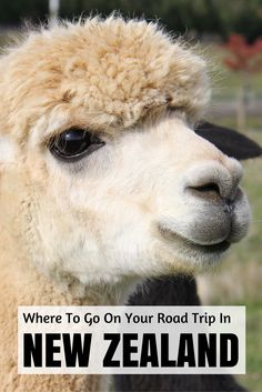 A sweet collection of road trips in New Zealand