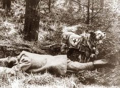 Red Cross Dog WWI