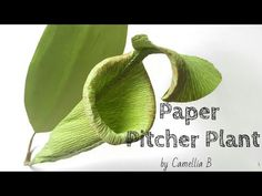 DIY: How to make paper Pitcher plant from crepe paper - Easy and realistic paper flower - YouTube