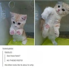 We laugh at the sight of cats' misbehavior gone wrong; Check out these 25 hilarious photos of cats stuck in things.Read This Top 25 Funny cats stuck in Things Cute Little Animals, Cute Funny Animals, Funny Cute, Cute Cats, Adorable Kittens, Top Funny, Pretty Cats, Beautiful Cats, Funny Animal Memes