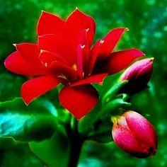 Imagenes De Rosas Tiernas