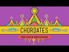 GREAT video seriers- Chordates - CrashCourse Biology #24
