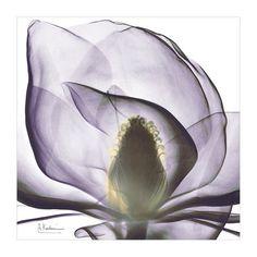 Art.com - Precious Orchid Art Print . 14.99 @Target