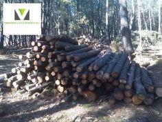 . Ponemos a la venta camiones de pino de diametros entre 16 a 40 cm y largo de 2,50 metros. Camion con 25 toneladas . Precio en cargadero 36 euros precio en destino consultar .- 4000 toneladas disponibles