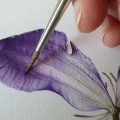 botanical watercolour painting of a clematis flower. botanical watercolour painting of a clematis flower.botanical watercolour painting of a clematis flower. Art Watercolor, Watercolor Painting Techniques, Watercolour Tutorials, Painting & Drawing, Painting Flowers Tutorial, Watercolour Illustration, Watercolour Flowers, Drawing Step, Watercolour Paintings