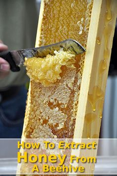 How To Extract Honey From A Beehive #homesteading