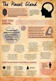 Pineal Gland, avoid fluoride and carbonated/fizzy drinks!