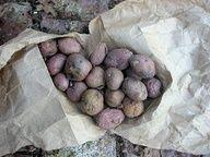 Sept diffrentes faons de faire pousser les pommes de terre.