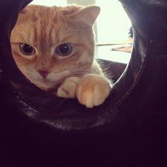 suzie_cat