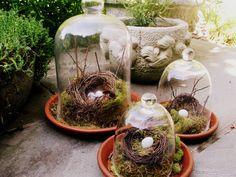 Études de nature sous verre Cloche de nid d'oiseau par juliazaffer