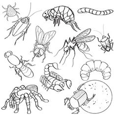 Creepy arachnid and insect clip art bug illustrations 24 piece creepy arachnid and insect clip art bug illustrations 24 piece ccuart Choice Image