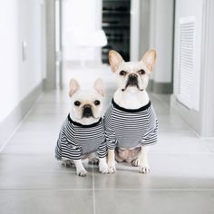 Piggy & Polly, French Bulldogs, in a Pipolli striped tee