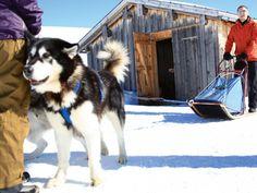 Schlittenhunde-Event: Fideriser Heuberge - Flinke Pfoten - Spot Magazine