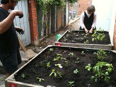 little vegie garden's laneway patch