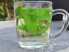 Michel's blog - Theetijd. De laatste tijd is het een beetje over met het drinken van koffie. Het is lekker, heel lekker zelfs, maar we zijn thuis in de ban van thee. Lekkere groene thee met een munt smaakje. Bekijk meer tips op www.tuinen.nl