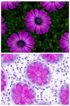 Love histology that looks like art!