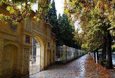 Eram street-shiraz
