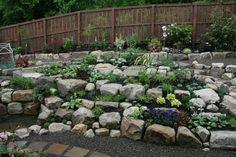 Steingarten gestalten - Zwischen den Steinen ist Platz für verschiedene Blumen