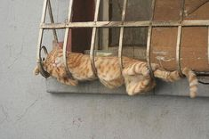 funny photos of cat's sleeping position, by designswan.com