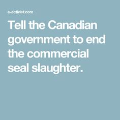 Tell the Canadian government to end the commercial seal slaughter.