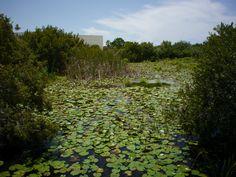 In the nature park at SPC Seminole. Panasonic 200mm.