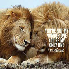 Relationship Principles No. Lion And Lioness, Lion Of Judah, Leo Quotes, Wisdom Quotes, Lioness Quotes, Positive Quotes, Strong Quotes, Make Me Happy Quotes, Lion Couple