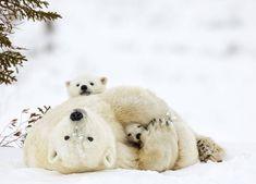 15+ Un-Bear-Ably Cute Momma Bears Teaching Their Teddy Bears How To Bear