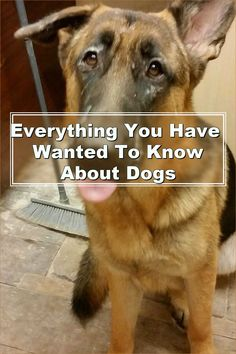 In summary, dogs help their owners experience unconditional love. However, to ensure you enjoy the best possible relationship with your dog, it's crucial that you learn all you can about it. This article has provided you with many tips to become a great owner. Use them and any other tips you read to reap the benefits of being a dog owner.