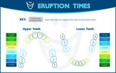 Learn when different teeth come in!
