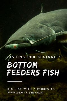 How To Catch Catfish, Fish List, Fishing For Beginners, Best Fishing, Carp, Read More, Boards, Facts, Planks