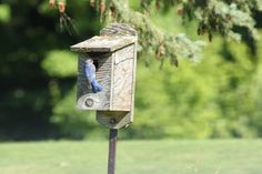 """""""Much to my surprise and joy, a Bluebird has taken up residence near our 12th green"""" -Member, Jane Kirkpatrick"""