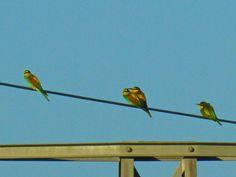 abejarucos descansando Parrot, Bird, Animals, Taking A Break, Lights, Parrot Bird, Animales, Animaux, Birds